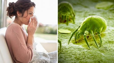 Partez en croisade contre l'allergie aux acariens