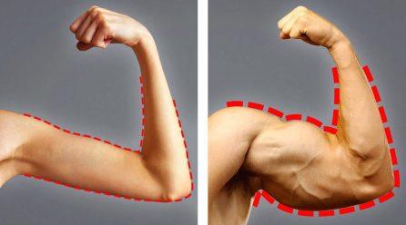 Quels sont les conseils à suivre pour prendre de la masse musculaire ?